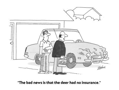 deernoinsurance